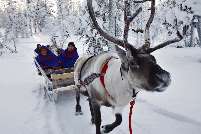 Snowmobile tour to reindeer farm + reindeer ride