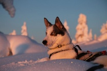 Snowshoe adventure with huskies